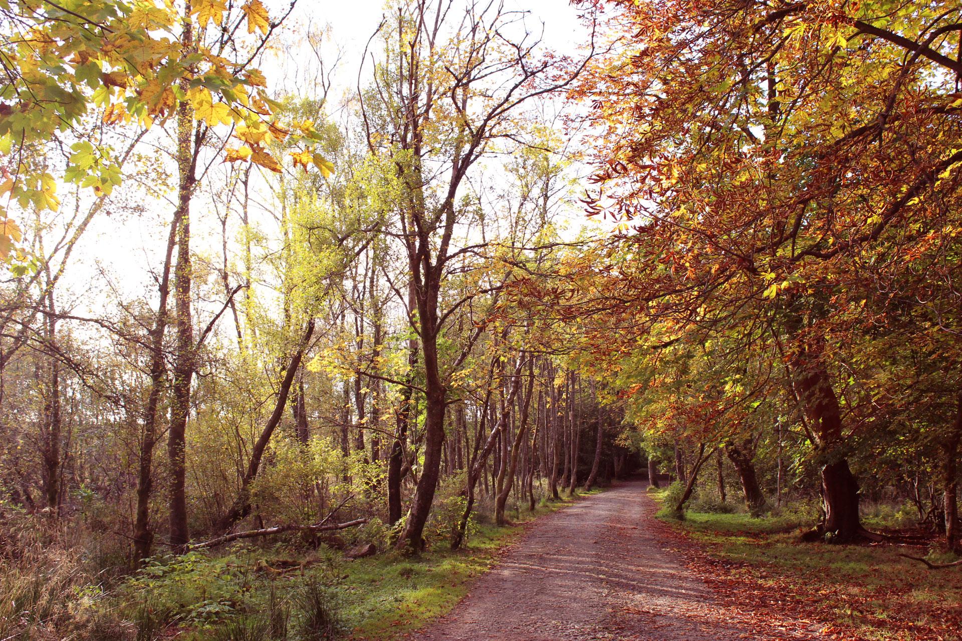 autumn-in-glasgow