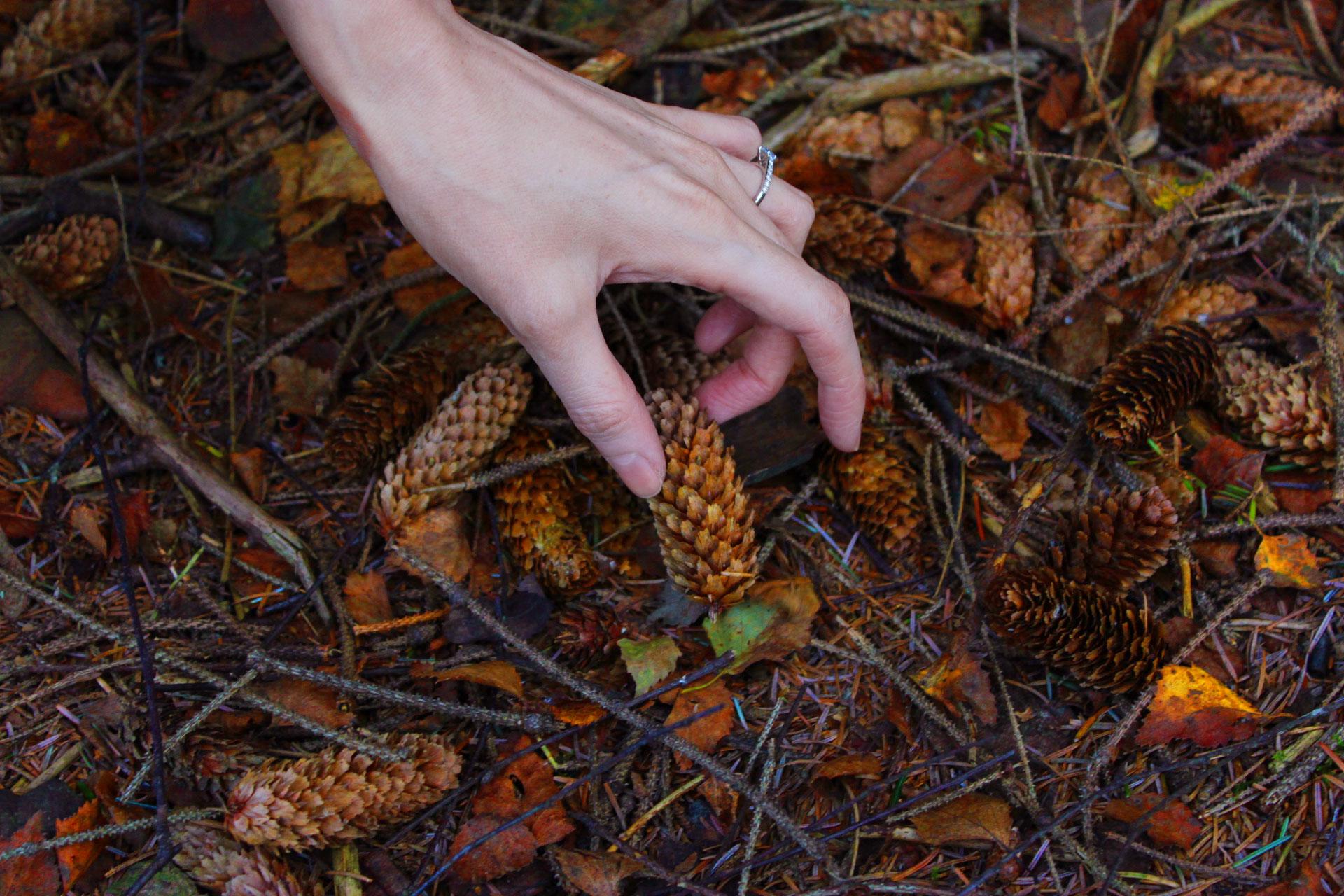 autumn-conker-picking-scotland