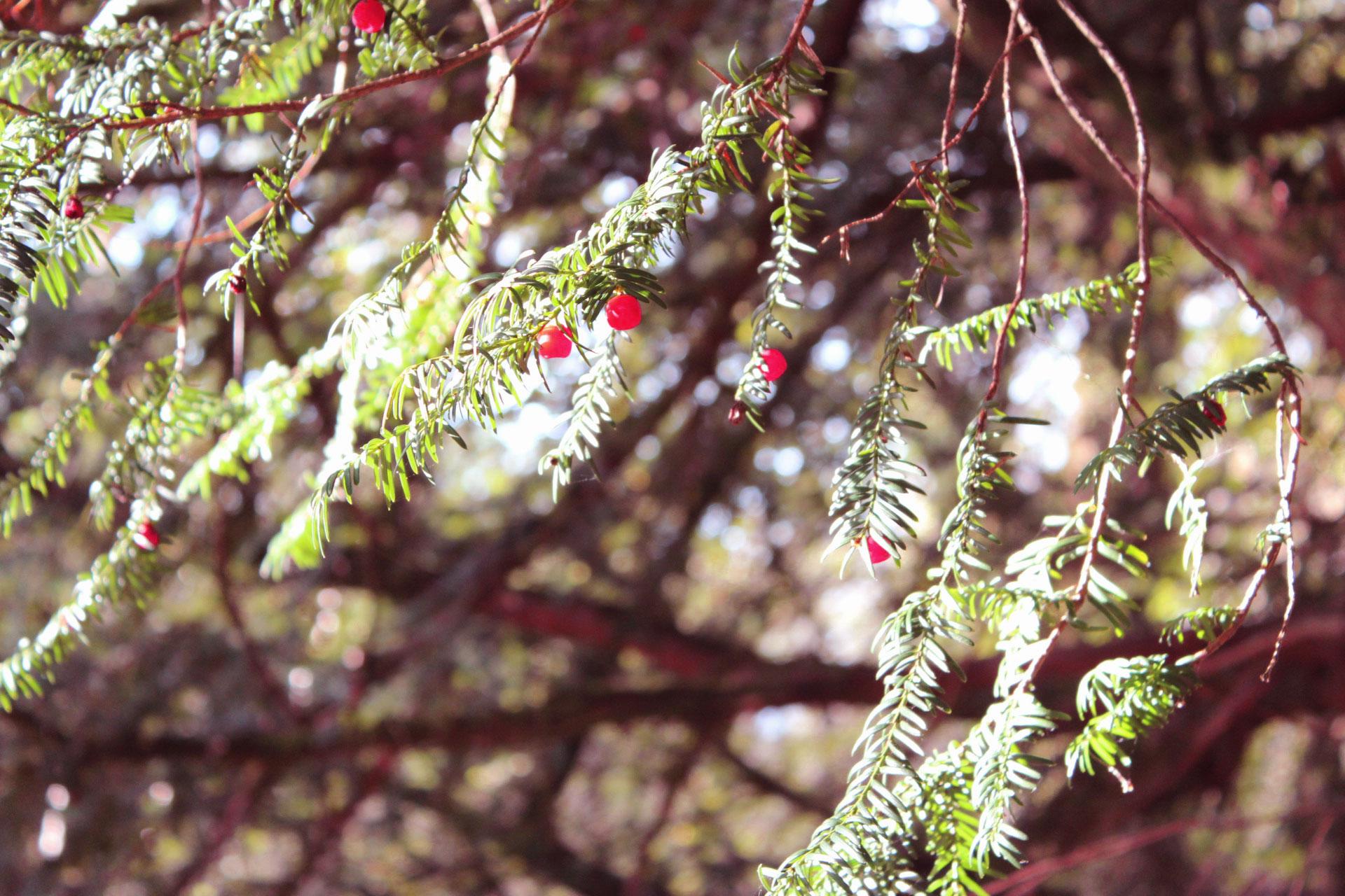 autumn-walks-scotland-web